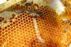 Bee Competitors and Diseases