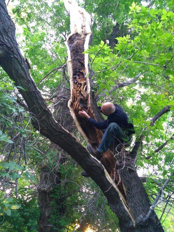 peter-checking-hive-in-split-tree