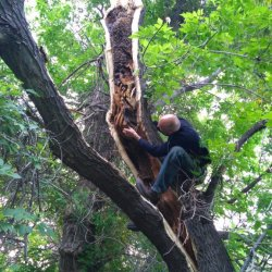 peter-checking-hive-in-split-tree