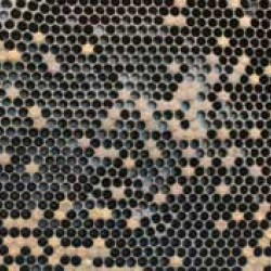 spotty-brood-pattern